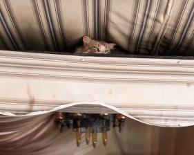 Feline Observer