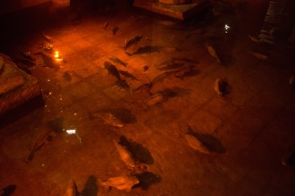 Carp in the Dark