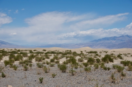 The heavy rains this Spring have turned the desert green.