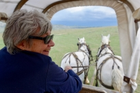Denise holds the Percherons.